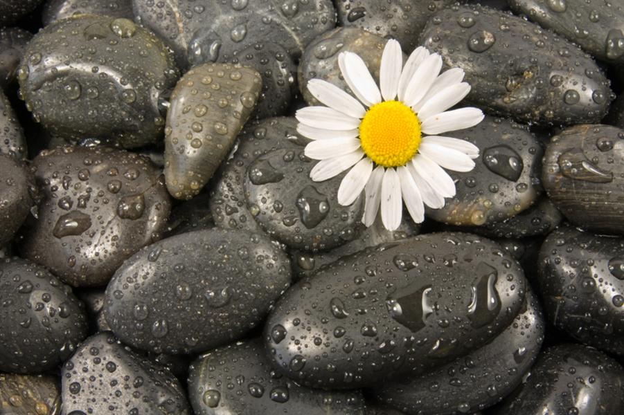 Flower growing from wet rocks